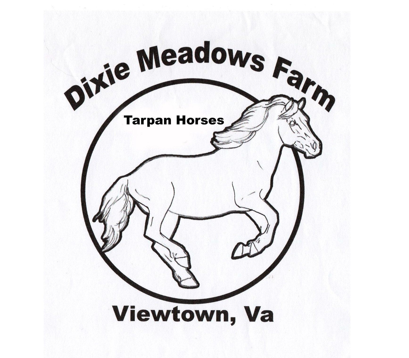 Dixie Meadows Tarpan Horses